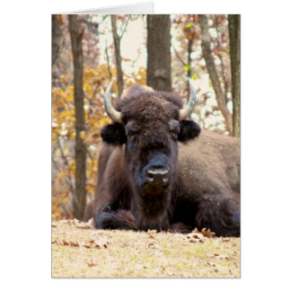 American Bison in Fall Colors Woods Animal Photo Card