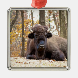 American Bison in Fall Colors Woods Animal Photo Metal Ornament