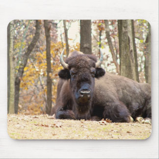 American Bison in Fall Colors Woods Animal Photo Mouse Pad