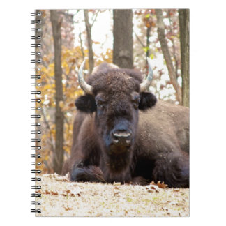 American Bison in Fall Colors Woods Animal Photo Spiral Notebooks