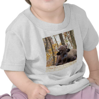 American Bison in Fall Colors Woods Animal Photo Tshirts