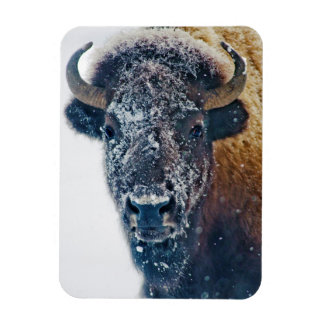 American Bison in Snow at Yellowstone NP Rectangular Photo Magnet