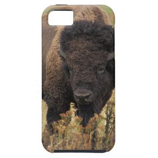 American Bison iPhone 5 Tough Case