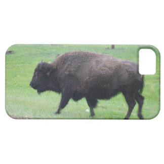 American Bison iPhone SE/5/5s Case