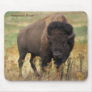 American Bison on the Range Mouse Pad