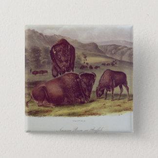 American Bison or Buffalo Pinback Button