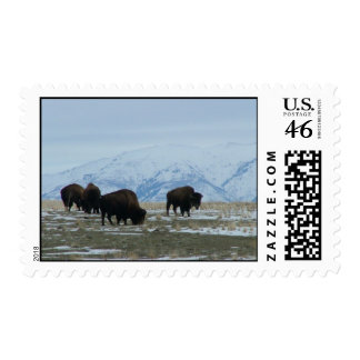 American Bison Stamps