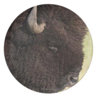 American Bison, South Dakota Melamine Plate