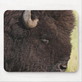 American Bison, South Dakota Mouse Pad
