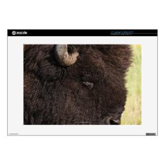 American Bison, South Dakota Skin For Laptop