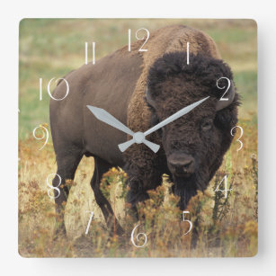 American bison square wall clock