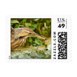 American Bittern and Crawfish Postage