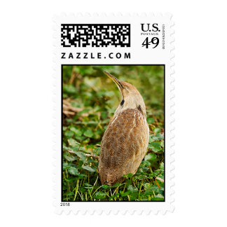 American Bittern Postage Stamp