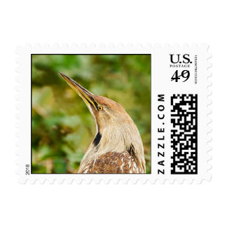 American Bittern Postage Stamps