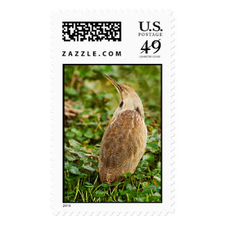 American Bittern Stamps