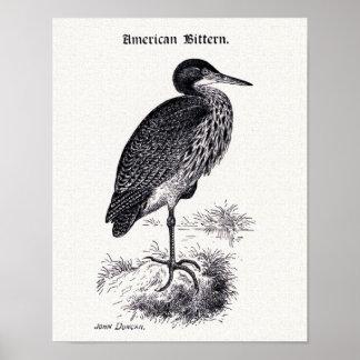 American Bittern Vintage Illustration Poster