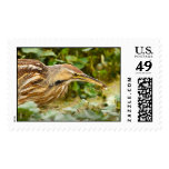 American Bittern with a Crawfish Postage