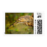 American Bittern with Black Fish Postage
