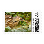 American Bittern with Crawfish Postage Stamp