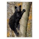American Black Bear Climbing a Tree Cards