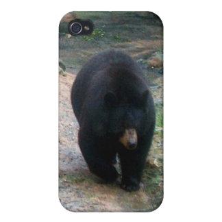 American Black Bear iPhone 4 Hard Shell Case