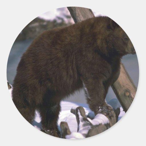 American Black Bear standing on snowy log Round Stickers