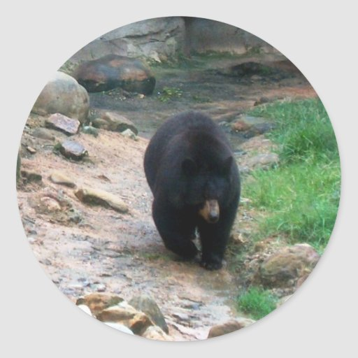 American Black Bear Sticker