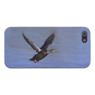 American Black Duck iPhone 5 Cover- Savvy Cover For iPhone SE/5/5s