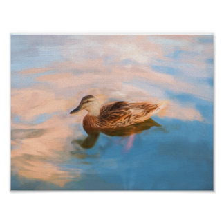 American Black Mallard Digital Painting Poster