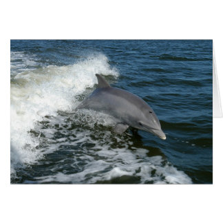 American Bottlenose Dolphin Card