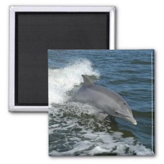 American Bottlenose Dolphin Fridge Magnet