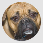 American Boxer Stickers