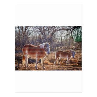 American Breed Postcard