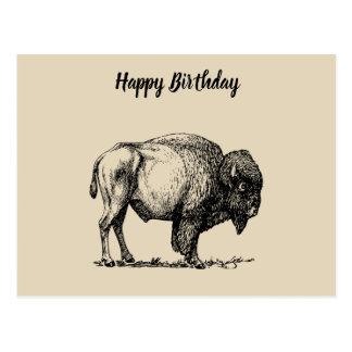 American Buffalo Bison Postcard