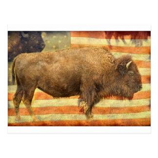 American Buffalo Postcard