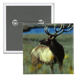 American Bull Elk Pinback Button