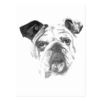 American Bulldog Greyscale Postcard