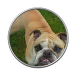 American Bulldog Jelly Belly Candy Tins
