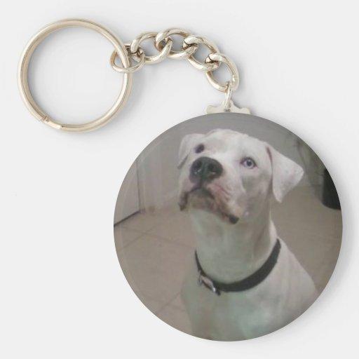 American bulldog keychain
