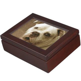 American Bulldog Memory Box