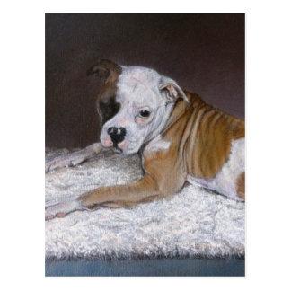 American Bulldog Painting. Postcard
