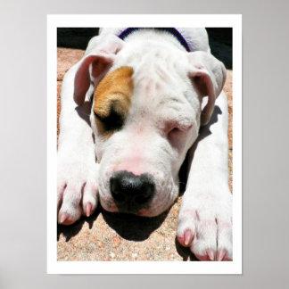 American Bulldog Print