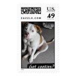 American Bulldog Puppy  Postage