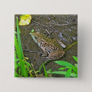 American Bullfrog - Rana catesbeiana Button