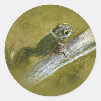 American Bullfrog - Rana catesbeiana Classic Round Sticker