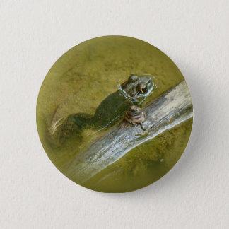 American Bullfrog - Rana catesbeiana Pinback Button