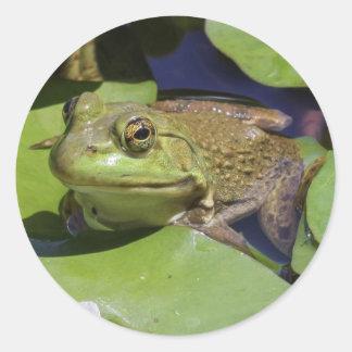 American Bullfrog Round Sticker