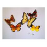American Butterflies Postcard