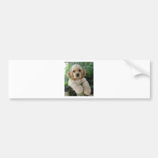 American Cocker Spaniel Dog And The Green Fern Bumper Sticker