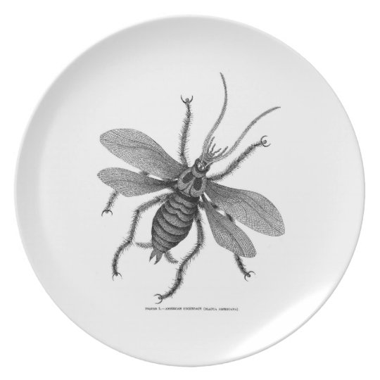 American Cockroach Engraving Plate